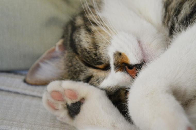 Adopción de mascotas: Noah cumple 3 años